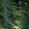 Riparian green