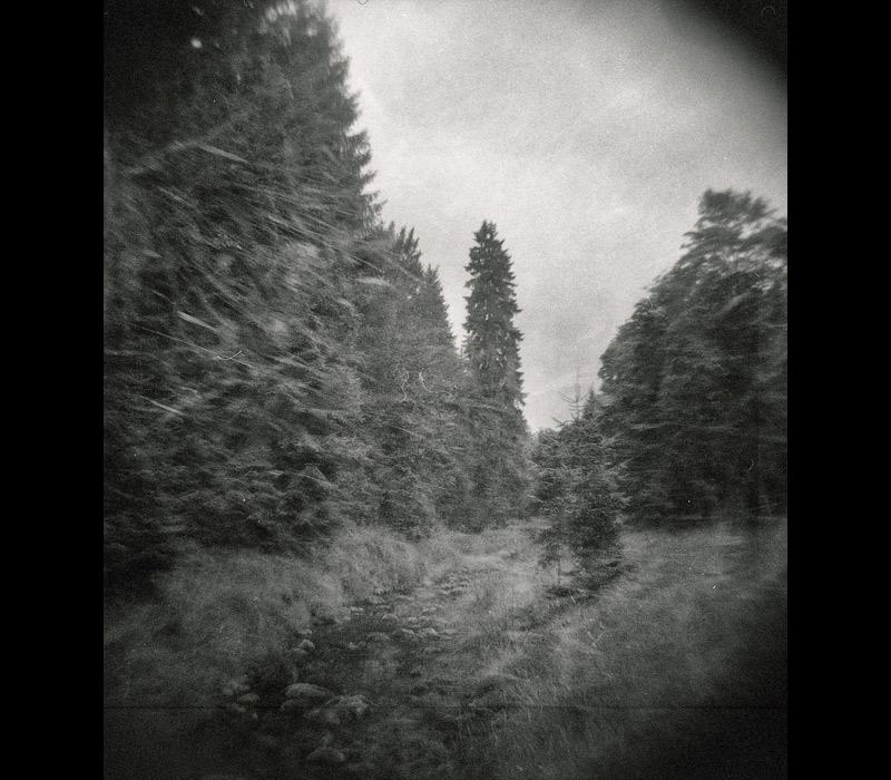 Holga im Wald
