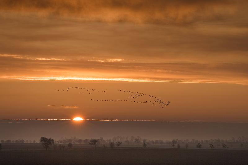 Sunrise with migratory birds