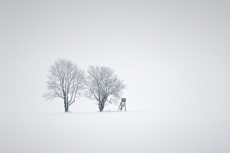 trees minimal nowhere snow white feldauge detached