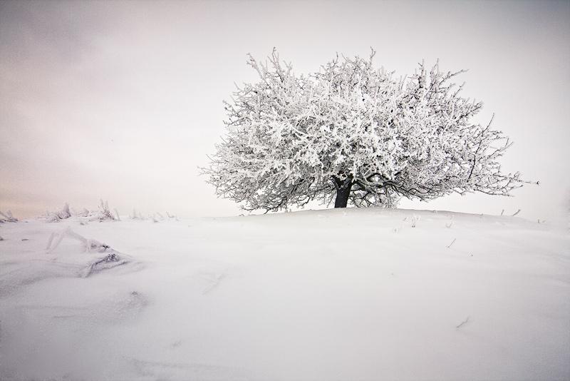 apple tree winter snow feldauge vignette