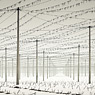 hop field winter snow feldauge beesenstedt