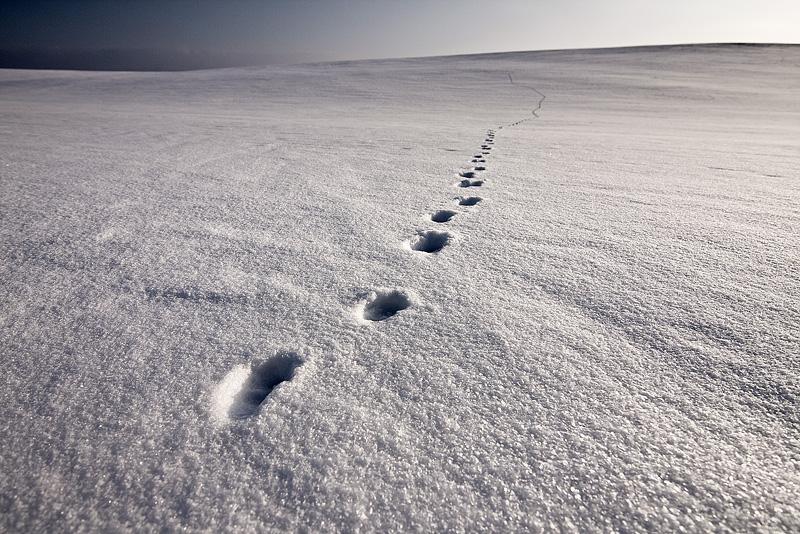 tracks snow winter plain feldauge döblitz