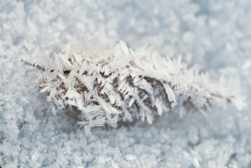 hoar frost winter snow macro leaf feldauge crystal