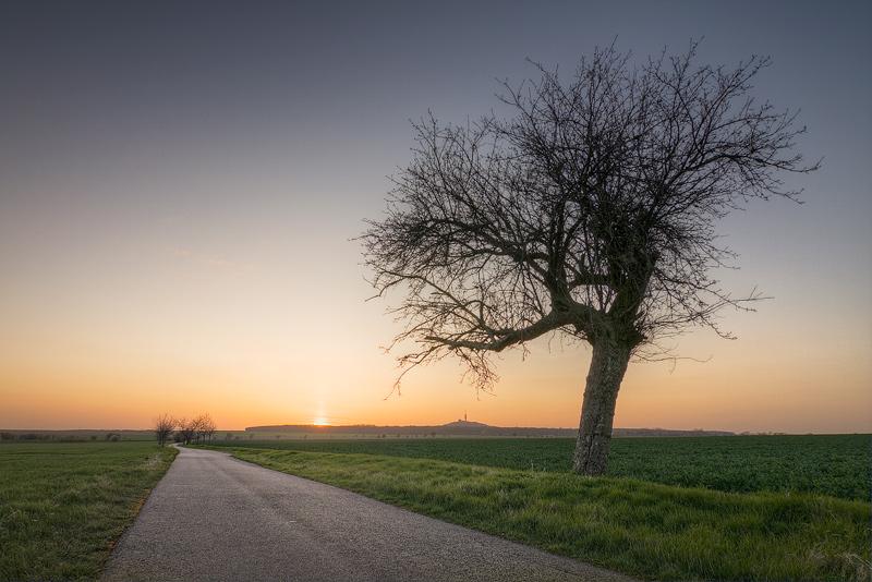 sunset petersberg kütten road tree feldauge saalekreis