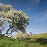 spring seeben halle feldauge flowers white blue sky rural