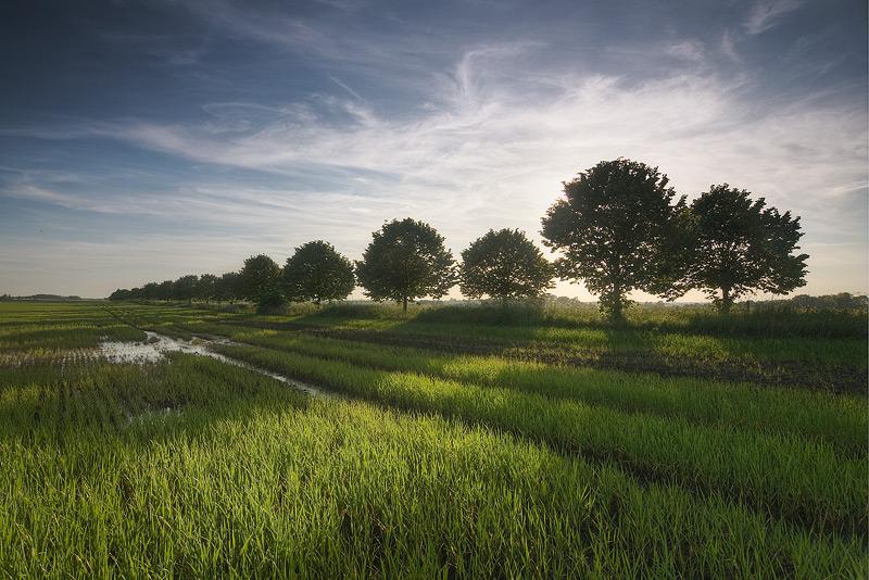 dalena saalekreis field sunset feldauge mud