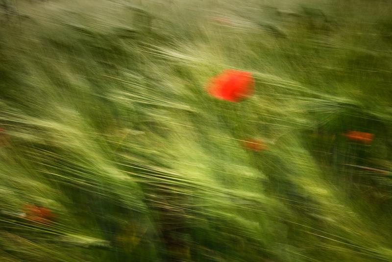 blurr poppy red green field feldauge