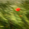 blurr poppy red green field feldauge