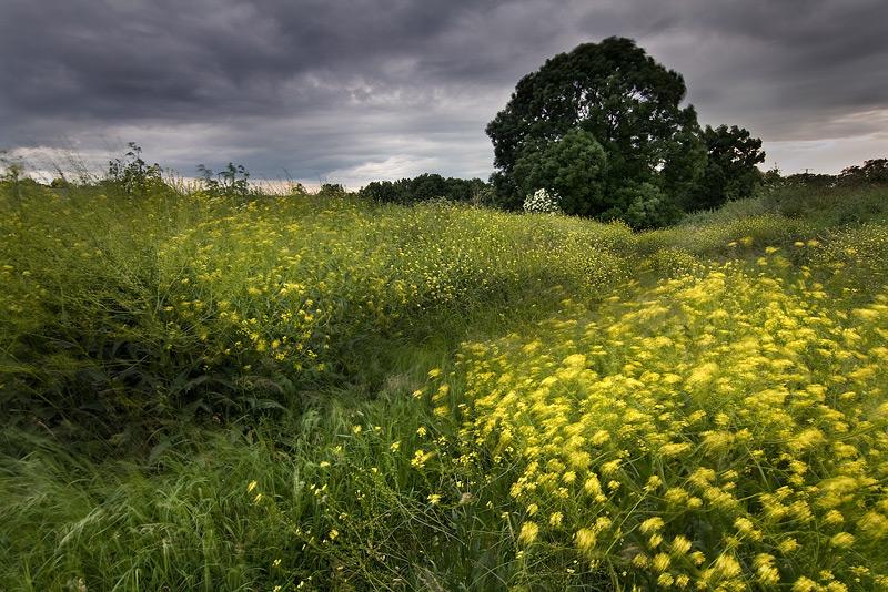 yellow flowers wind feldauge long exposure