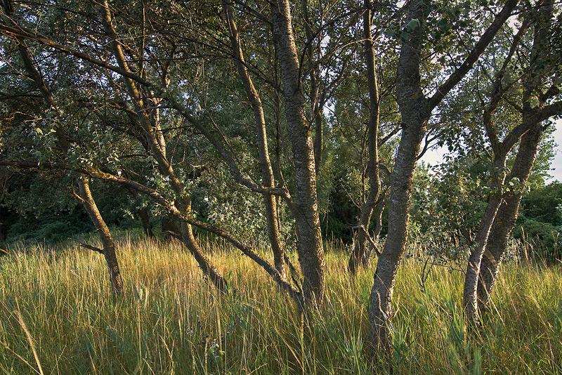 ostsee baltic sea trees evening light feldauge
