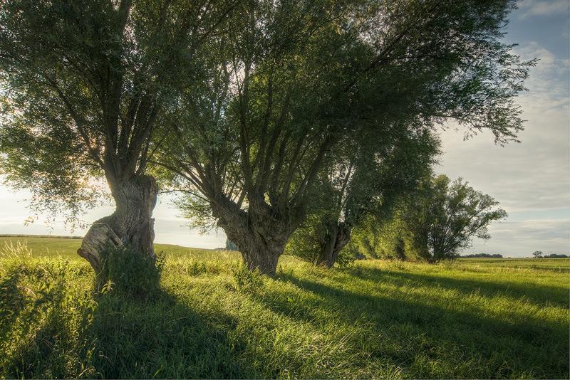 willows beckerwitz feldauge