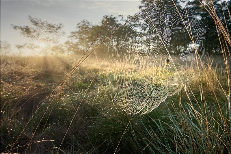 spider cobweb sun morning autumn feldauge gimritz
