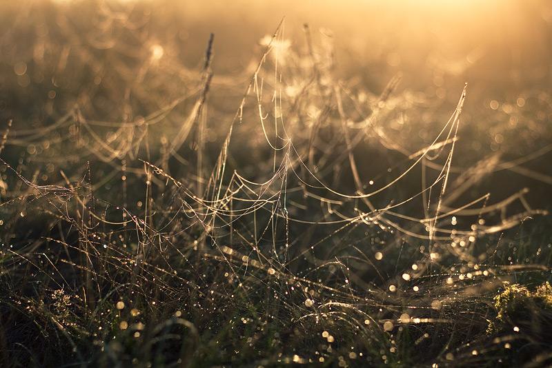 autumn spider stars shiny universe feldauge DOF