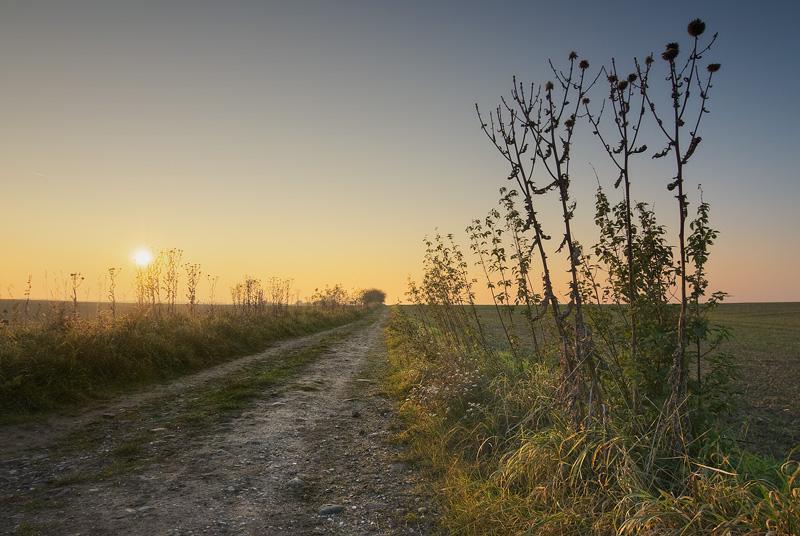 räthern path sun evening thistles feldauge saalekreis