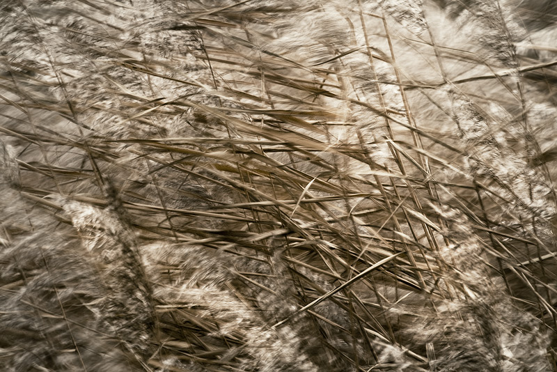 reed wind seeben autumn movement blur feldauge