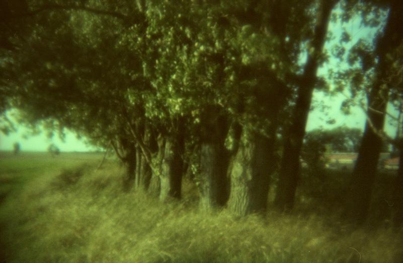 soft blur analogue feldauge domnitz trees