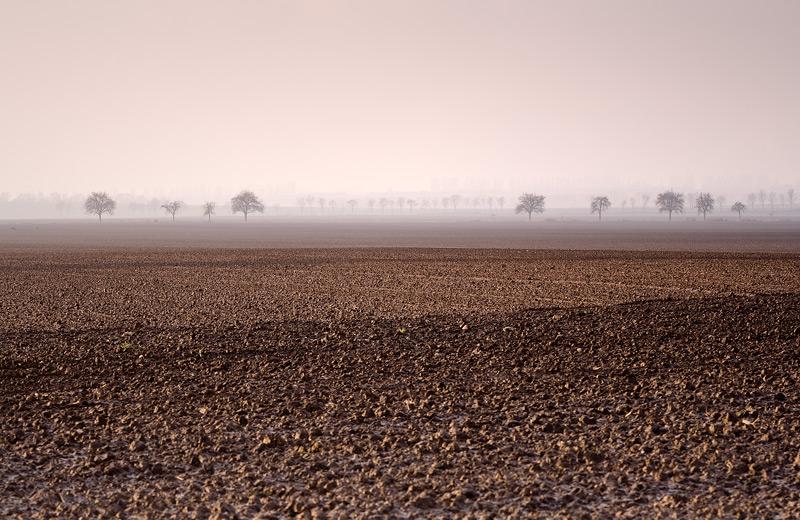empty fields tree autumn feldauge domnitz saalekreis