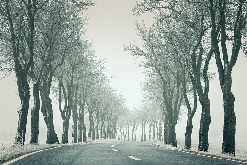 lettewitz trees feldauge misty cold hoarfrost winter alley