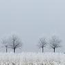 franzosensteinweg halle feldauge frost hoarfrost