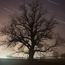 night star trails long exposure tree feldauge saalekreis light pollution