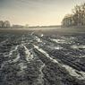 field sunrise kütten mud delta feldauge spring