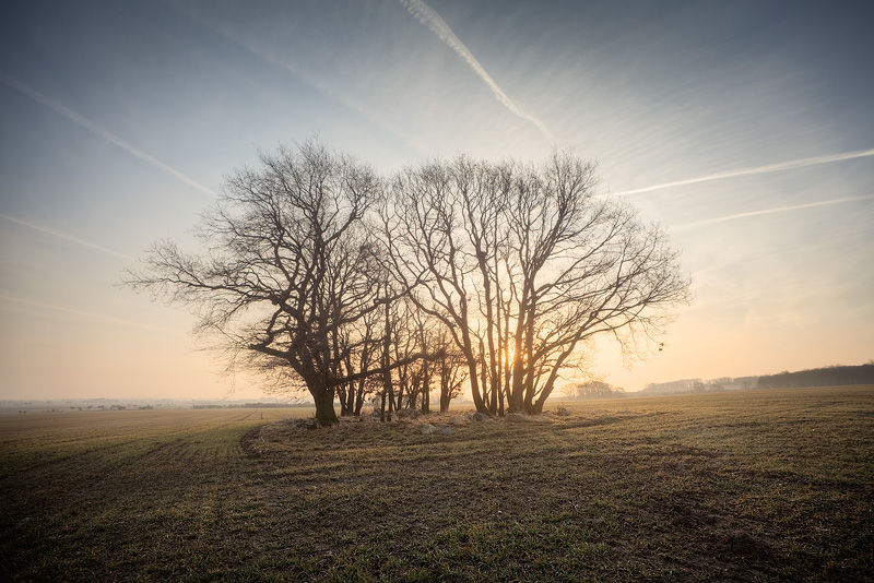 feldauge tree group field kütten morning sun sunrise saalekreis