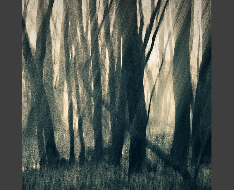 wackel trees wood forest cross blurred feldauge kütten