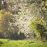 domnitz spring feldauge green DOF