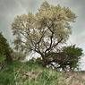 tree spring white flowers schachtberge feldauge saalekreis