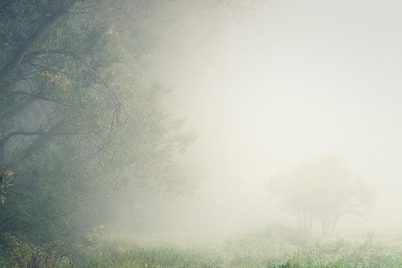 fog mist cottenwood autumn feldauge franzigmark