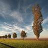 allee feldauge dalena saalekreis autumn sun