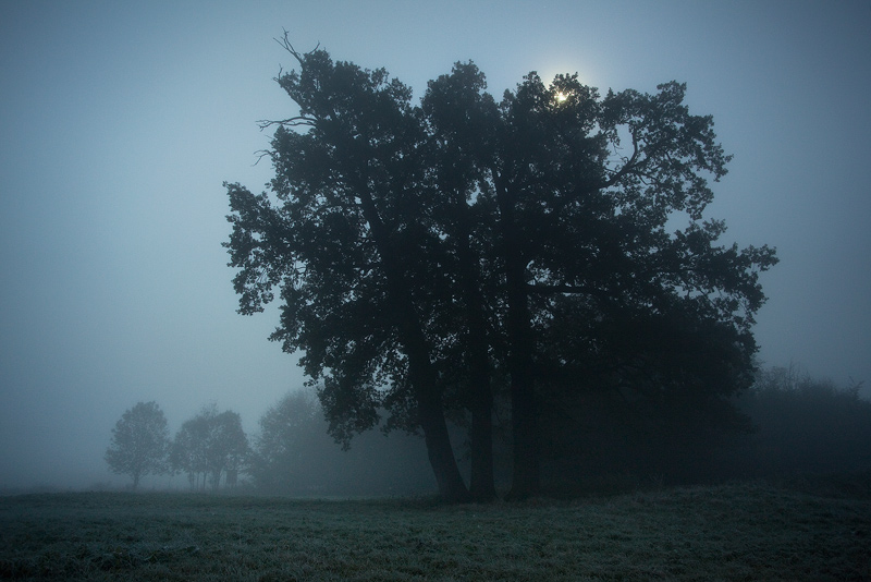 night moon dark tree fog feldauge wettin
