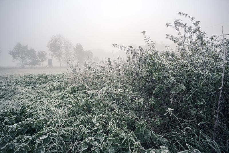 frost wettin gesträuch brennnesseln nettle white feldauge
