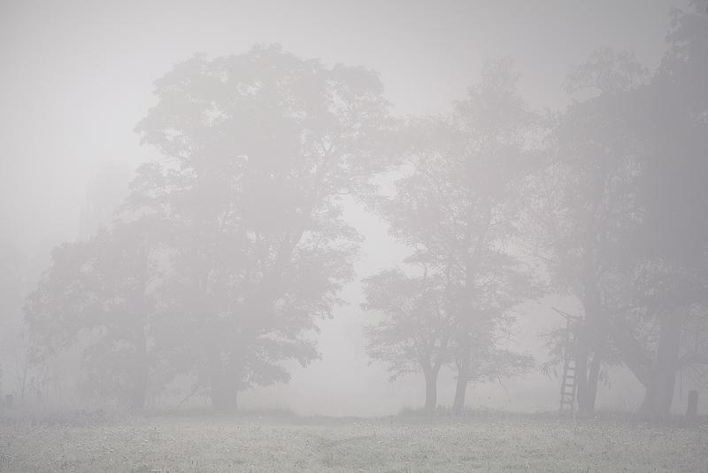 wettin nebel fog silhouette lowkey feldauge
