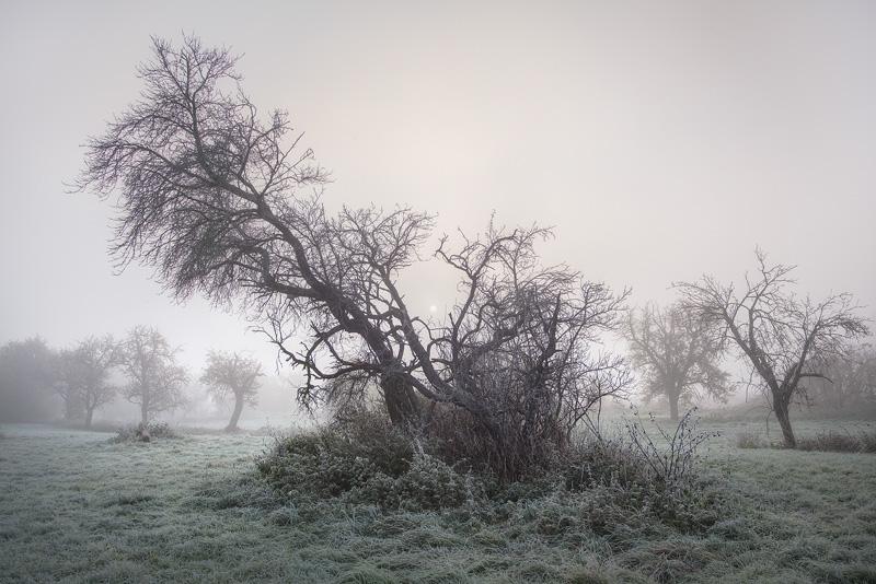 wettin frost hain feldauge fog misty