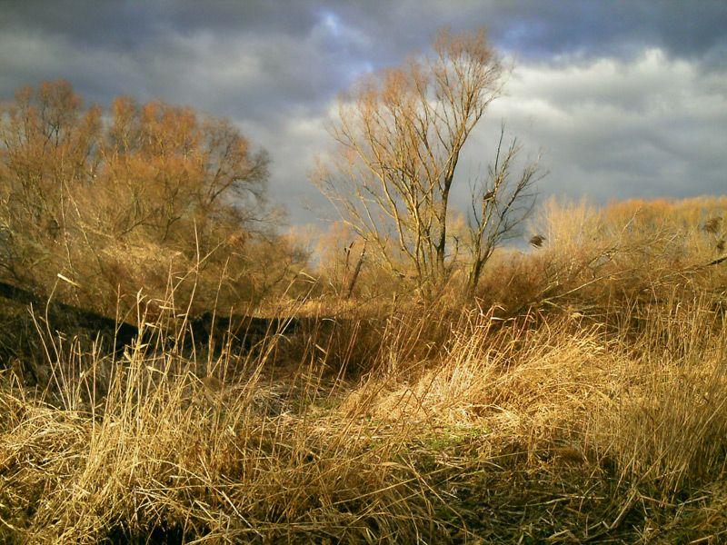 dramatic light scene feldauge halle reed wind bad-quality