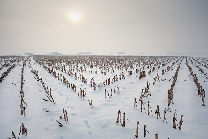 schnee snow schachtberge feldauge mais corn lines domnitz