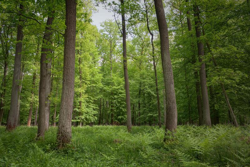 forest wald feldauge spring
