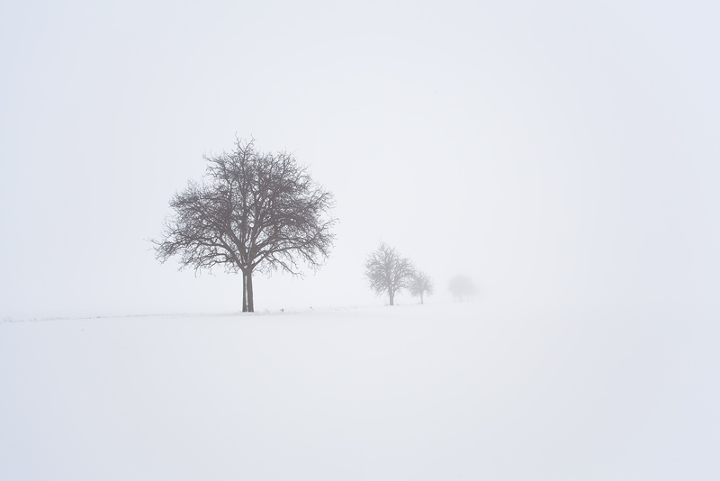 trees fog white winter snow feldauge domnitz