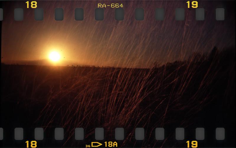 Holga sunset